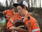 Northern Ontario Fires. Saving A Beaver.