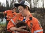Northern Ontario Fires. Saving A Beaver.